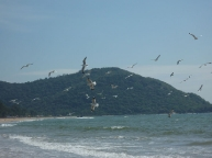 Seagulls on Agonda beach