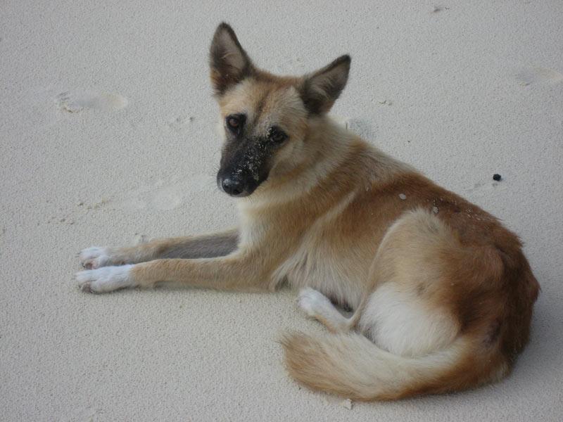Dog at Seven Commando Beach, El Nido