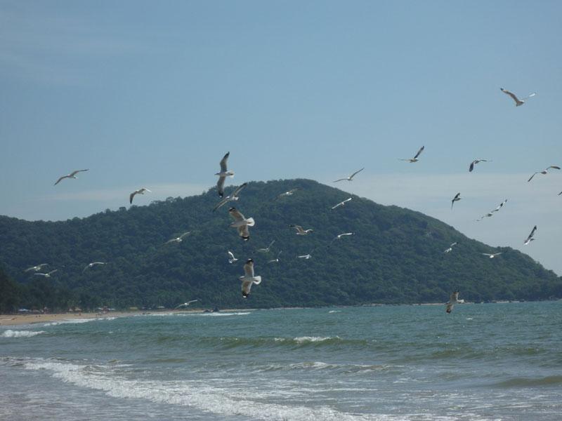 Seagulls on Agonda beach