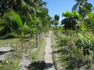 2.inland.road.to.kabatangan.malapascua.jpg
