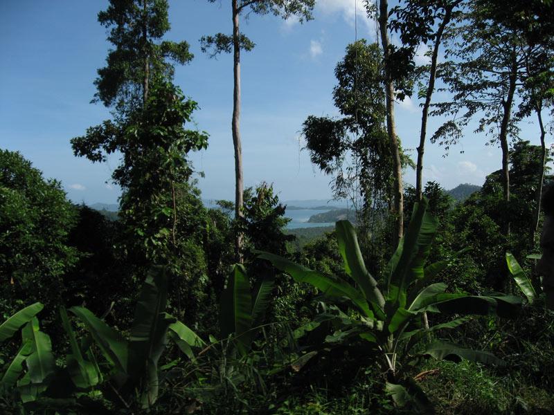 pagdanan bay from the palawan jungle