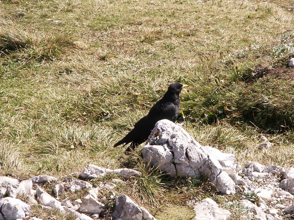 birds.of.der.untersberg (1)_full