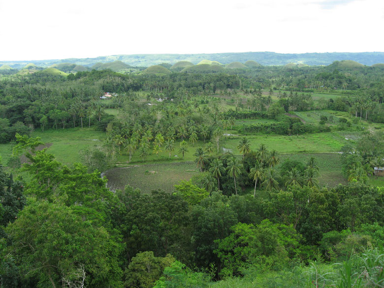 Bohol Rice field